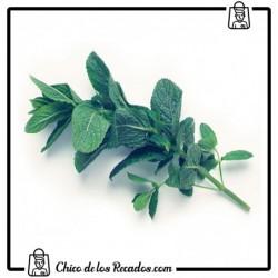 Hierbas Aromáticas - Menta - Hierbabuena