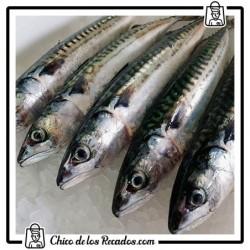 Pescado fresco - Caballa (s/b)