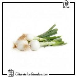 Cebolla fresca (Montijo)
